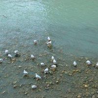 Чайки :: Georgy Kalyakin