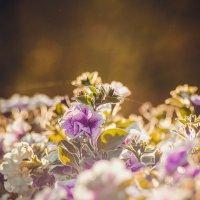 Flowers :: Алёнка Шапран