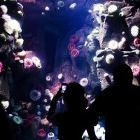 аквариум :: Оксана Дольна