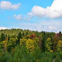 Лес - это добрый огромный гигант... :: Танюша Коc