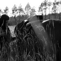 Мария и камелот :: Кристина Щукина