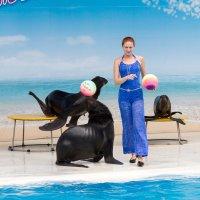 Дельфинарий. Северные морские котики. :: Yuri Chudnovetz