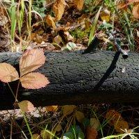 Лесной художник. :: Rafael