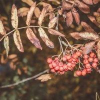 осеннее тепло красок :: Екатерина Рябцева