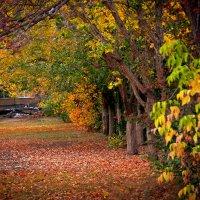 Осенние цвета :: Сергей Бутусов