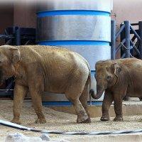 Слониха со слонёнком... :: Наталья Агеева