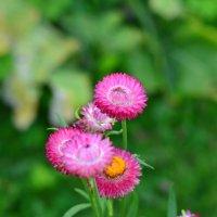 Осенние цветы :: N. Efimkina