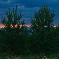 Елочки на красивом закате :: Михаил *******