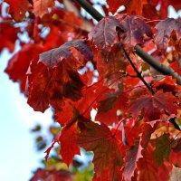 Осень :: Сергей F