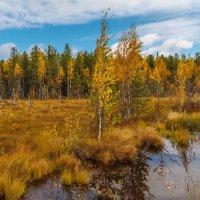 Югорская болотная картинка :: Георгий Кулаковский