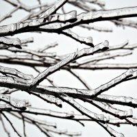 Ледяная красота... зимы захотелось! :: Полина