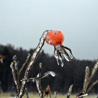 Замороженный шиповник ... :: Полина