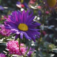 Осенний цветок :: esadesign Егерев