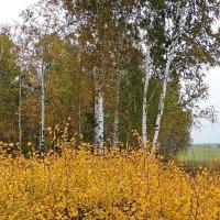 Осень. Пасмурное золото #1 :: Виктор Четошников
