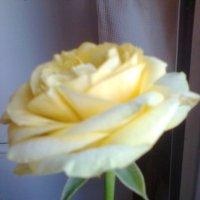 с международной выставки цветов в 2014г. :: Galina194701