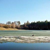 Весна на пруду :: Лидия (naum.lidiya)
