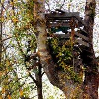 Старый домик на дереве. Автор Натан. :: Фотогруппа Весна.