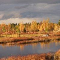 Осень  пришла в ЯНАО :: Аркадий Иваковский