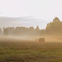 Утро туманное :: Елена Панькина