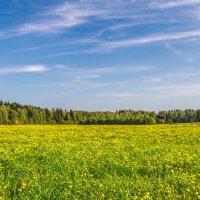 осеннее поле :: Екатерина Рябцева