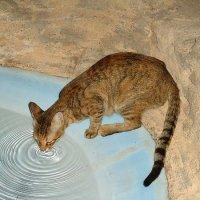 Египетская кошка :: Ирина