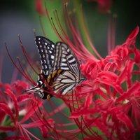 на цветке :: Slava Hamamoto