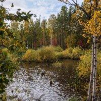 Осень. Утиный пруд в Академгородке. 22.09.2014. Canon EOS 5D Mark II. :: Vadim Piottukh
