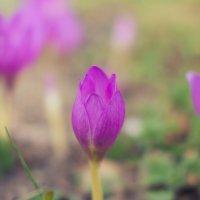 Цветок. :: Виктор Гришенков