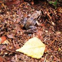 Маленький лягушонок :: Андрей Снегерёв