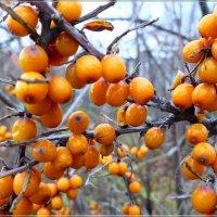 Осенняя радость :: galina tihonova