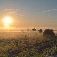 Утренний туман :: Андрей Словин