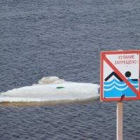 Плавать запрещено! :: Наталья (Nattina) ...