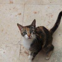 Удивленный котик :: Артем Бардюжа