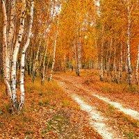 Дорога в осень :: Александр Бойко