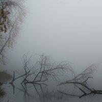 в тумане.. :: дмитрий посохин