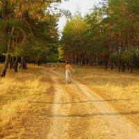Осенний лес... :: Сергей Петров
