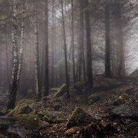 Осень в лесу :: Владимир Хижко