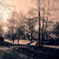 Вечер в парке 10 :: Цветков Виктор Васильевич