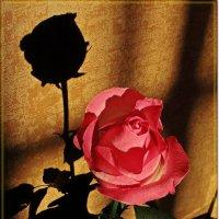 Роза в полумраке :: Лидия (naum.lidiya)