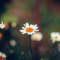Flower :: Анастасия Пушкарёва