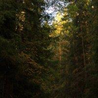 Вечер в лесу :: Aнна Зарубина