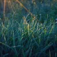 в лучах восходящего солнца :: Татьяна Кретова