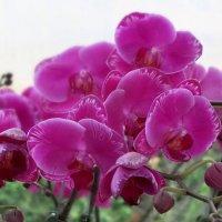 Далат город цветов :: Андрей Головин