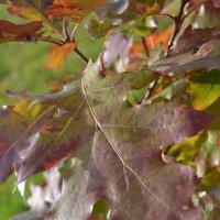 Осенний лист. :: zoja