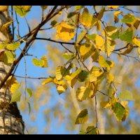 Желтый блик :: Мария Конькова