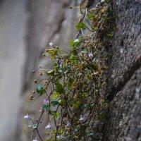 Цветок на стене :: Никита Иванов