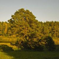Осень в Василево :: Druma Bassters
