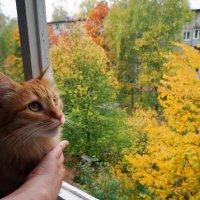 У окна :: Елена Федотова