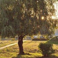 Солнечные лучики :: Dasha Darsi
