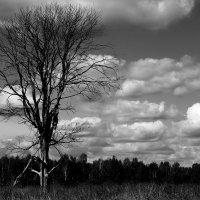 Могучие дерево :: Кристина Щукина